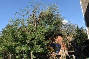 Преодолени са главните поражения в село Скобелево след бурята