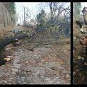 Фото факт: Дърво падна в Ловеч в нощта срещу 15 ноември